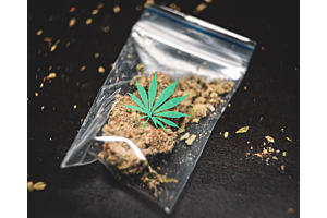 10 best strains of all time