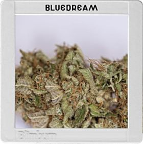blimburn blue dream