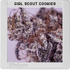 blimburn girl scout cookies