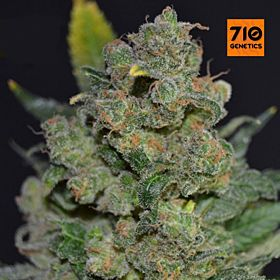 710 710 Stilton Feminized Seeds