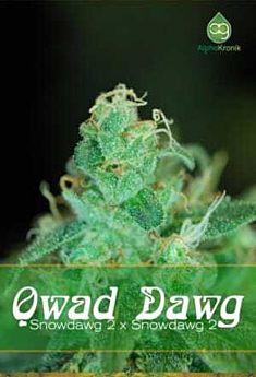 Qwad Dawg Regular