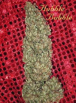 mandala hubble bubble