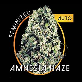 vision amnesia haze auto
