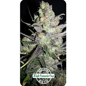 Dispensario Seeds Clinical Fem