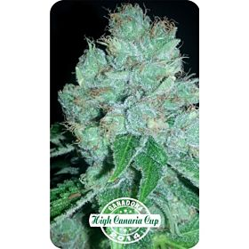 Dispensario Seeds Auto Eter Express Fem
