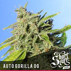 short stuff auto gorilla og
