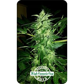 Dispensario Seeds Auto Relax Fem