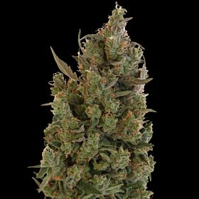 barney's farm blue cheese