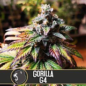 gorilla g4 auto