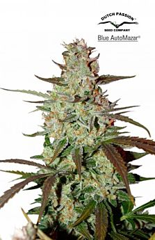 blue-automazar-cannabis-plant