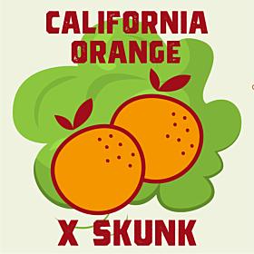 California Orange x Skunk
