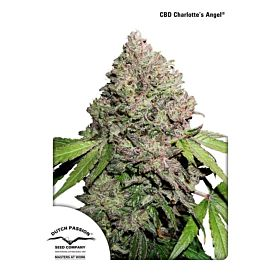 Dutch Passion CBD Charlotte's Angel Fem