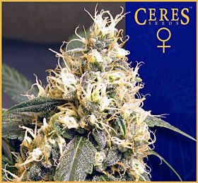 Ceres Seeds Ceres Skunk Feminised Seeds