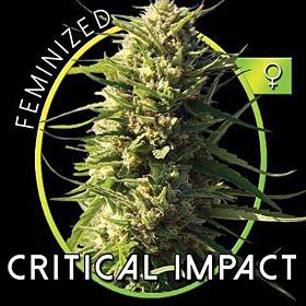 vision critical impact