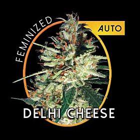 vision delhi cheese Gouda's Grass