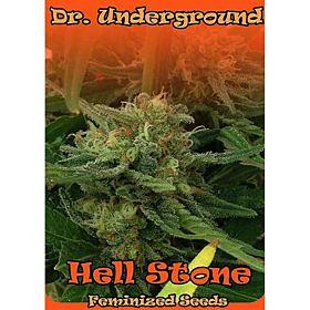 Dr Underground Hell Stone Feminized Seeds