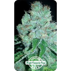 Dispensario Seeds Eter Express Fem
