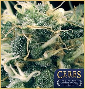 Ceres Seeds Fruity Thai Feminised Seeds