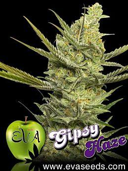 Eva Seeds Gipsy Haze