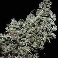 reeferman hoa bac silver flower