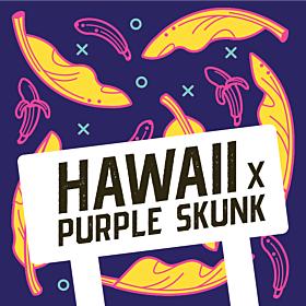 Hawaii x Purple Skunk