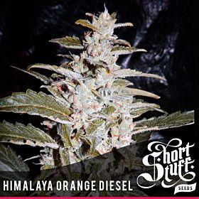 Short Stuff Himalayan Orange Diesel