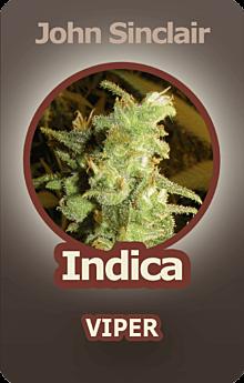 John Sinclair Viper Cannabis
