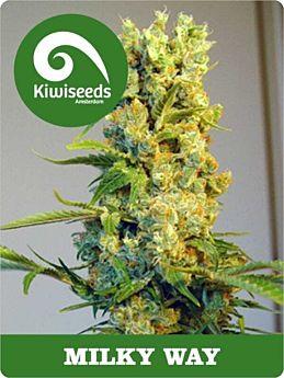 kiwi seeds milky way