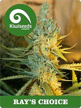 kiwi seeds ray's choice