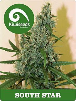 kiwi seeds south star