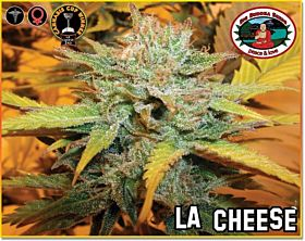 Big Buddha L.A. Cheese Feminised Seeds