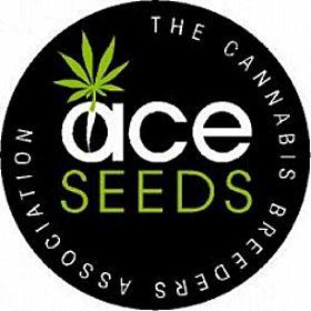 ACE Seedbank Purple Haze x Panama Regular Plant