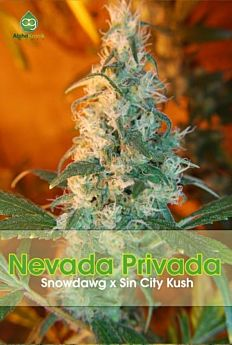 Alphakronik Genes Seedbank Nevada Privada Regular Plant