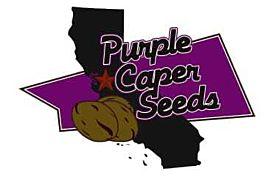 Purple Caper Seeds Outdoor Mixed Pack Reg
