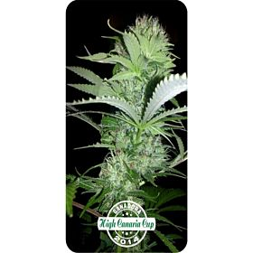 Dispensario Seeds Rehab Fem