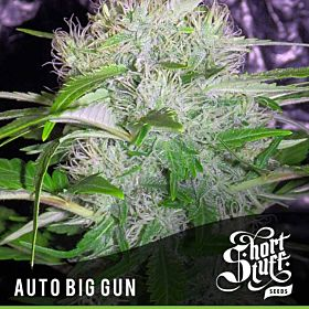 short stuff auto big gun