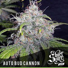short stuff auto bud cannon