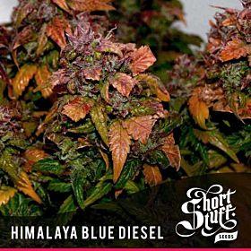 short stuff himalaya blue diesel