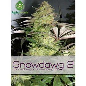 Alphakronik Genes Seedbank Snowdawg 2 Regular Plant