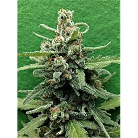 Breaking Buds Seeds Soylent Green Auto Fem