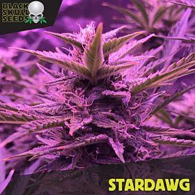 Stardawg fem