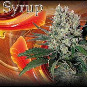 Buddha Seeds Syrup Auto Feminised