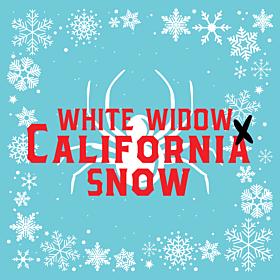 White Widow x California Snow