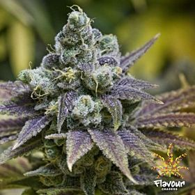 zkittlez fem flavour chasers