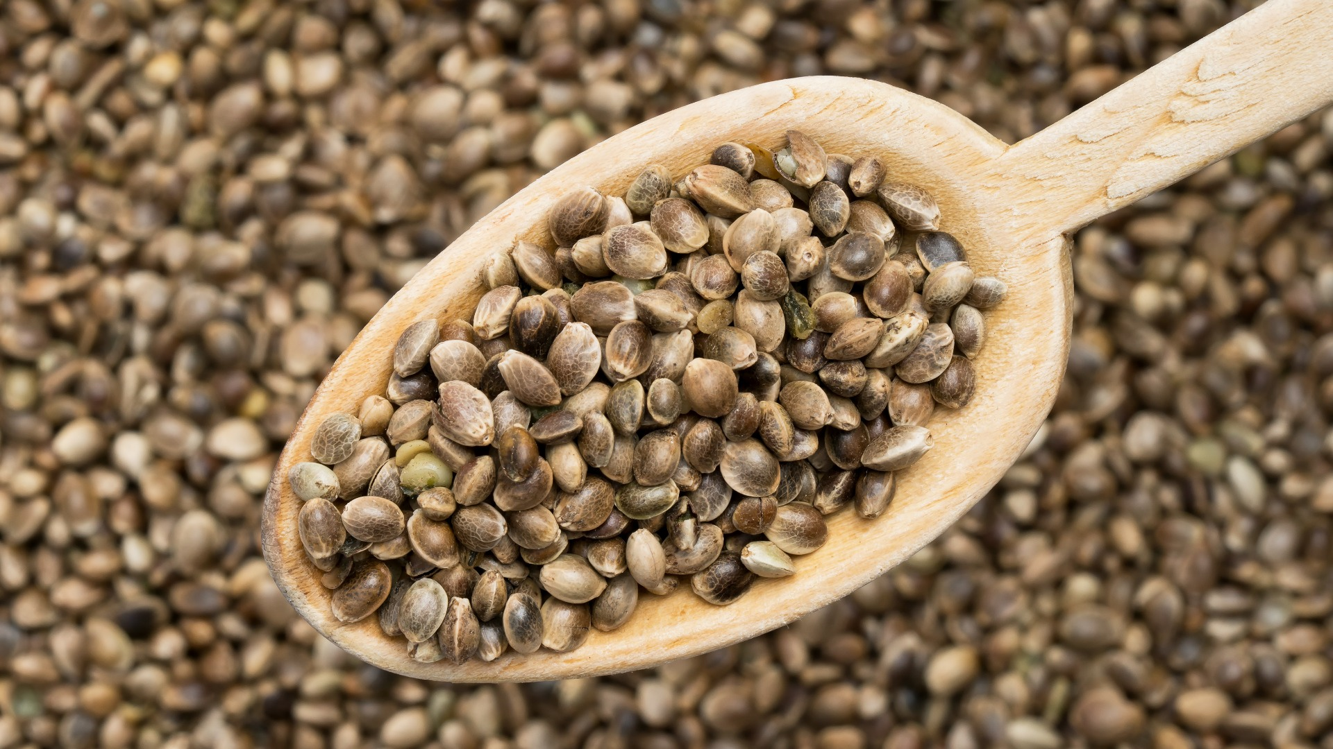 Can You (and Should You) Touch Cannabis Seeds with Bare Hands?