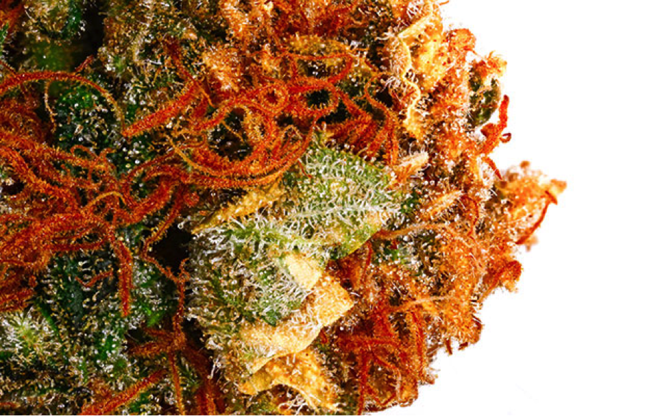 7 Session Strains That Won't Get You Wasted…Probably