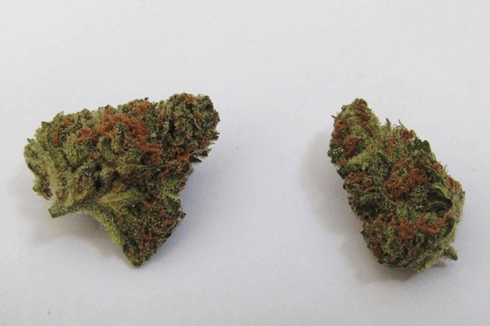 Pot Profiles: Mango