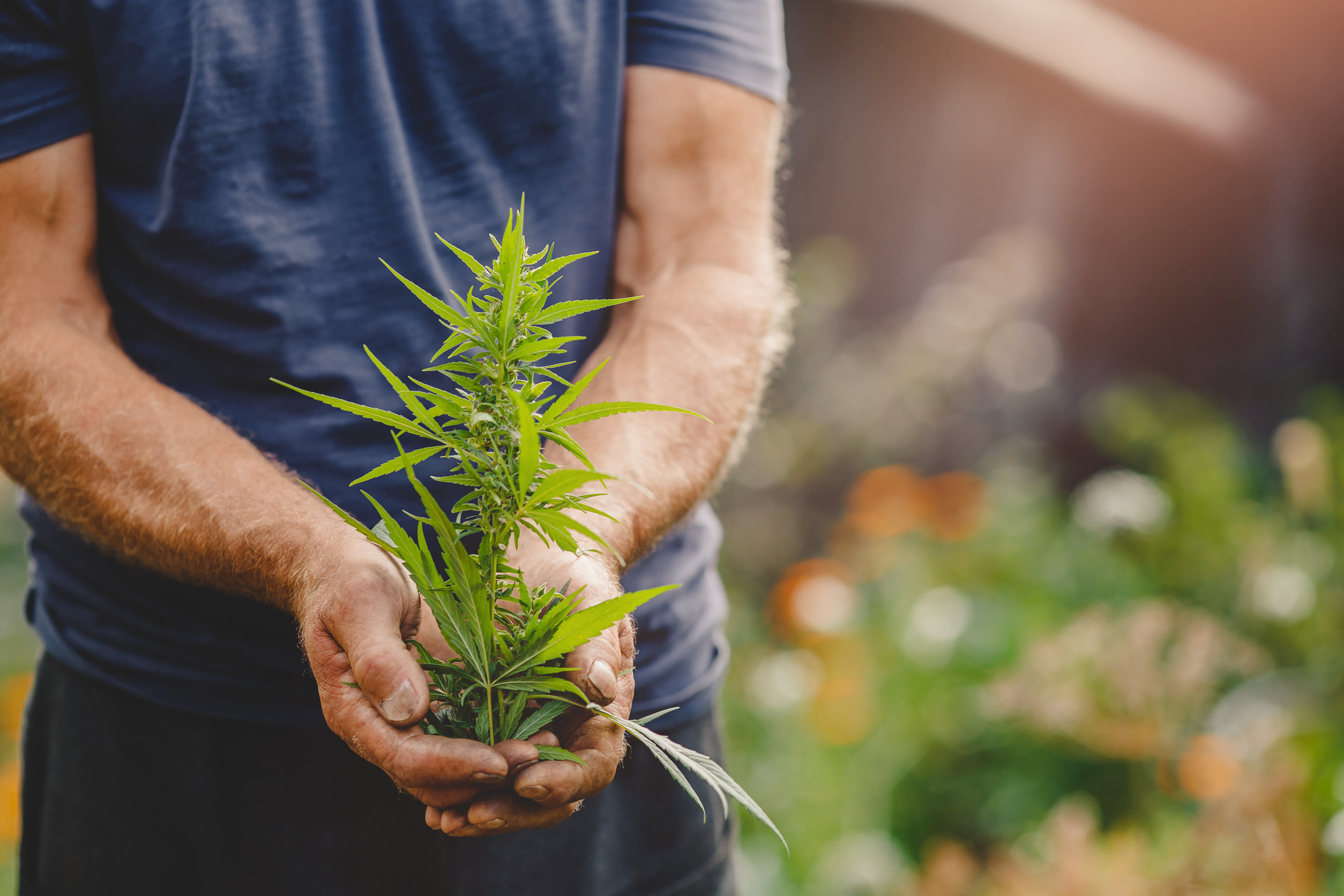 Is growing weed worth it? 6 reasons you should grow your own cannabis