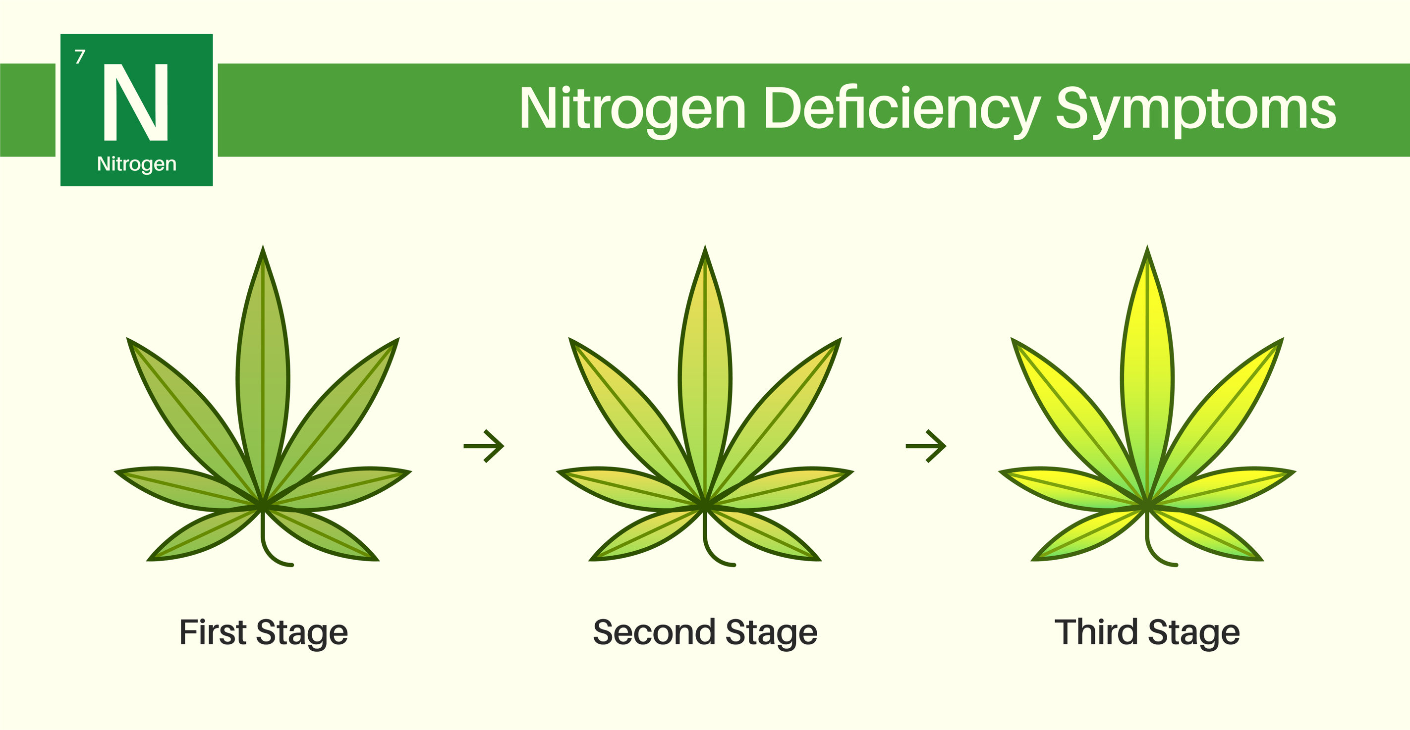 How to Fix a Nitrogen Deficiency in Cannabis
