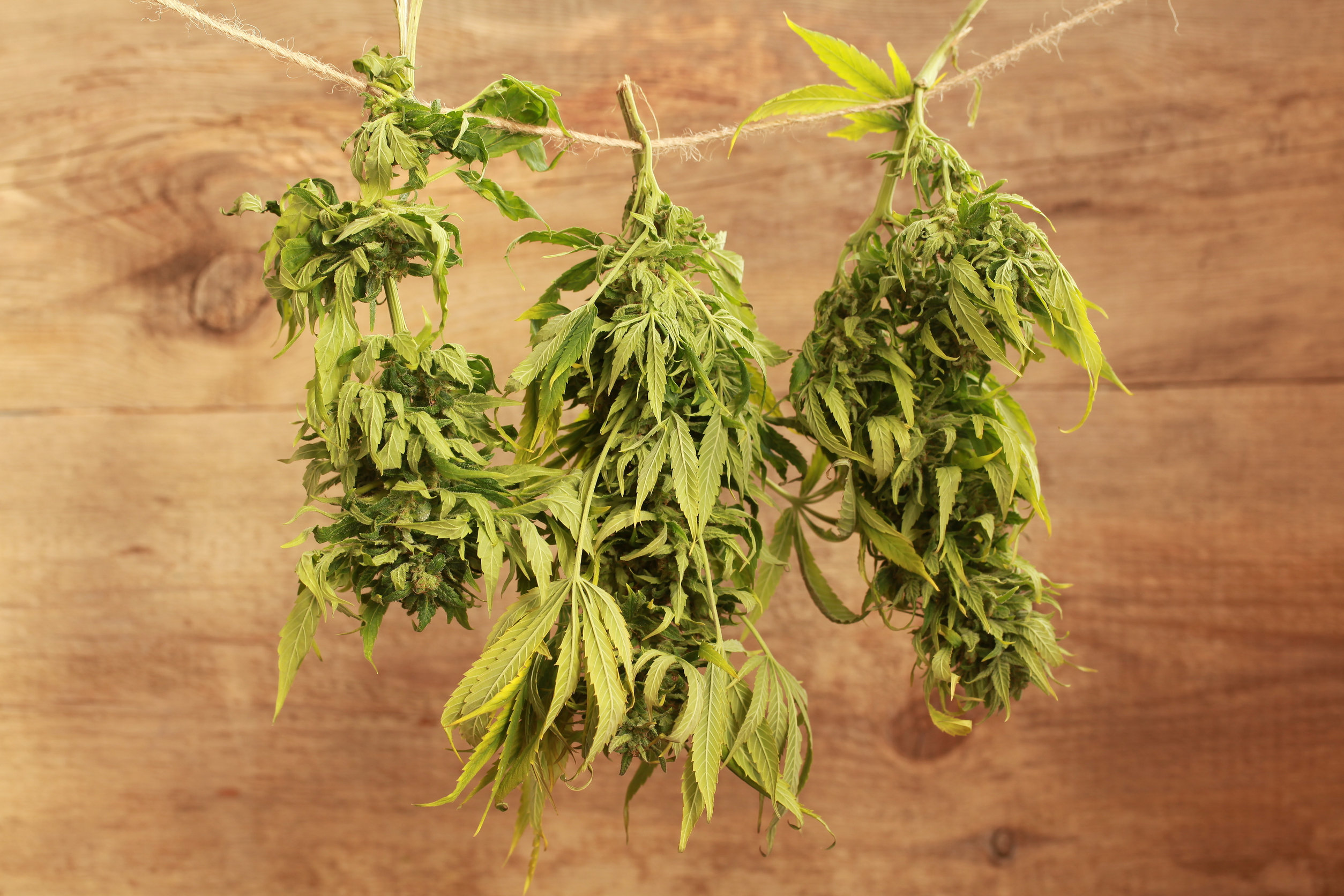 The ultimate guide to drying and curing weed